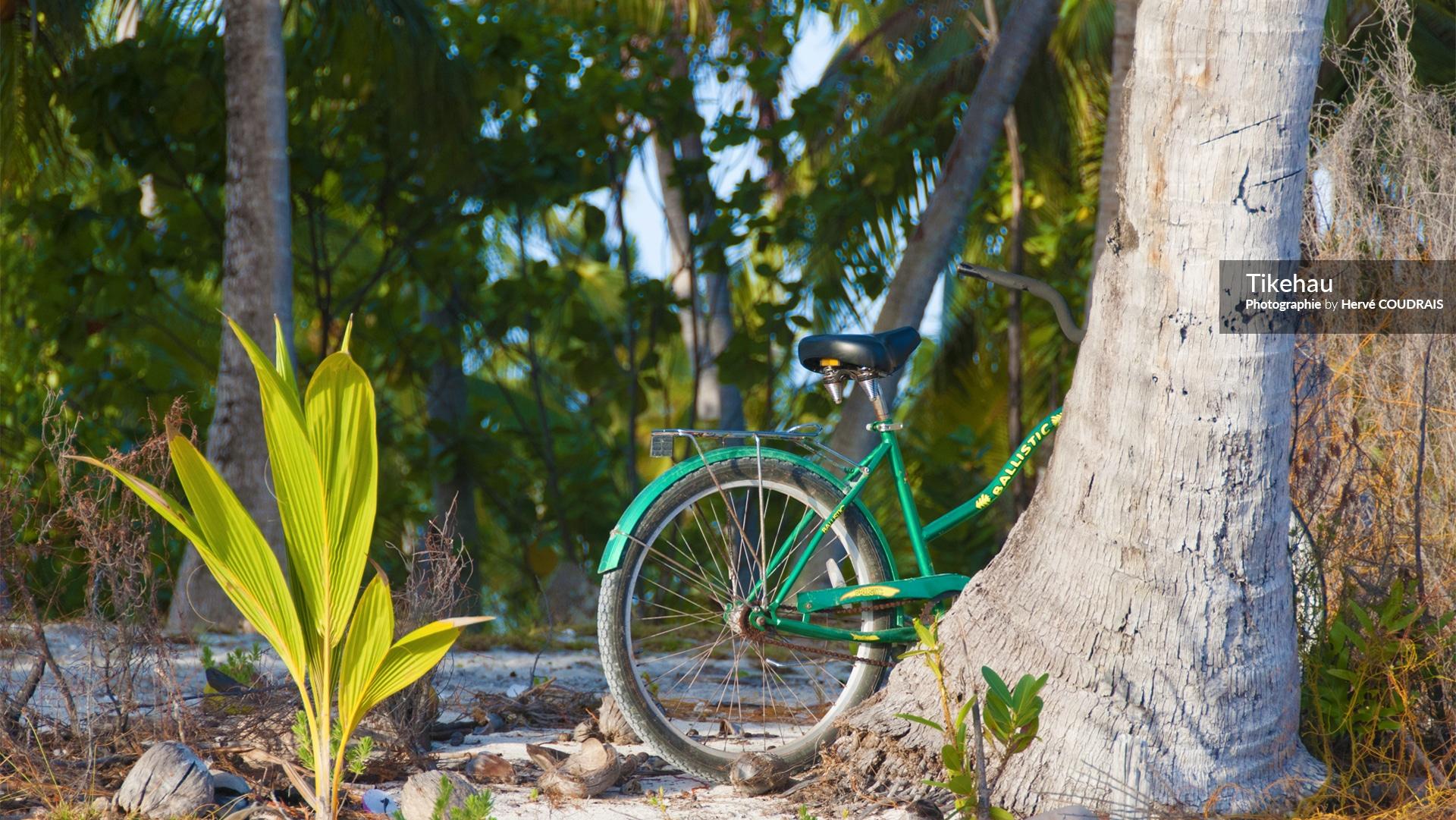 Tikehau, Atoll des Tuamotu, Polynésie, cocotiers, photographie Hervé Coudrais, Polynésie française,
